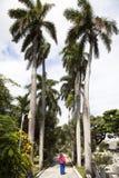 Palmowa aleja Zdjęcia Stock
