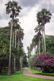 Palmowa aleja Obraz Royalty Free