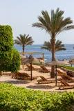 Palmowa aleja na tropikalnej egipcjanin plaży Zdjęcie Royalty Free