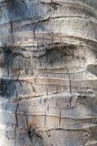Palmowa bagażnik tekstura jako tło struktura zdjęcie royalty free