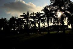 Palmowa gaj sylwetka Zdjęcie Royalty Free