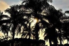 Palmowa gaj sylwetka Obrazy Royalty Free