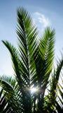 Palmowa natura obraz royalty free