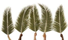 palmowa Niedziela Fotografia Stock