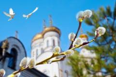 Palmowa Niedziela Wierzby gałąź z baziami Fotografia Stock