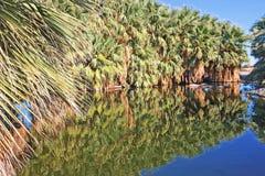 Palmowa oaza Obraz Stock