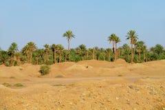 Palmowa oaza Zdjęcie Stock