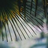 Palmowa roślina liścia ekologia zdjęcie royalty free