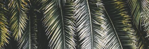 Palmowa roślina liścia ekologia obraz stock
