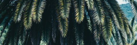 Palmowa roślina liścia ekologia obrazy royalty free