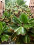 Palmowa roślina zdjęcia stock