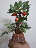 palmowa roślina zdjęcie stock