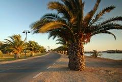 palmowa road Zdjęcia Royalty Free