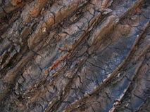 Palmowa tekstura Zdjęcia Stock