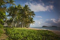 Palmowa zatoczka Zdjęcie Stock