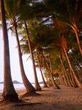palmowa zatoczka Australia obraz stock