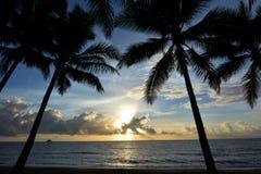 Palmowa zatoczka przy wschodem słońca Queensland Australia Zdjęcia Stock