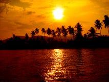 palmowe sylwetki drzewne Zdjęcia Royalty Free