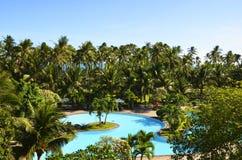palmowego basenu pływaccy drzewa Zdjęcia Stock