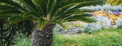 Palmowej rośliny naturalna ekologia obraz stock