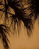 Palmowi cienie Zdjęcie Royalty Free
