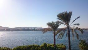 palmowi drzewa słoneczne dni Obrazy Royalty Free