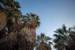 palmowi drzewa z nieba zdjęcia royalty free