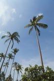 palmowi drzewa z nieba Fotografia Royalty Free