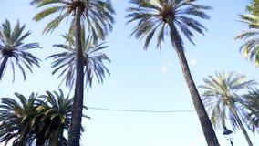 palmowi drzewa z nieba zapas Drzewka palmowe w miasto parku Drzewko Palmowe przy letnim dniem Lato podróży pojęcia tło zbiory
