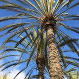 Palmowi Fronds obrazy royalty free