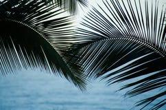 Palmowi Fronds Zdjęcia Stock