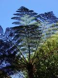 Palmowi Fronds w słońcu fotografia stock