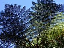 Palmowi Fronds w słońcu zdjęcie royalty free