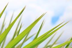 Palmowi liście Zielony tło - Abstrakcjonistyczna sztuka wśród natury - Obraz Royalty Free