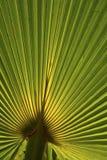 Palmowi liście Obrazy Royalty Free