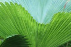 Palmowi liście Obraz Royalty Free