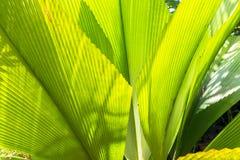 Palmowi liście Obrazy Stock