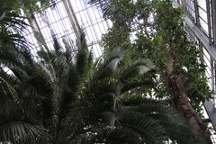 Palmowi liście Zdjęcie Royalty Free