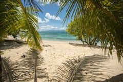 Palmowi liście Zdjęcia Royalty Free
