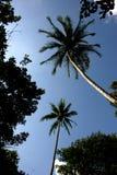 palmowi perspektywiczni drzewa Zdjęcie Royalty Free