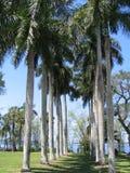 palmowi rzędów drzew Fotografia Royalty Free