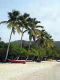 palmowi rzędów drzew Zdjęcia Royalty Free