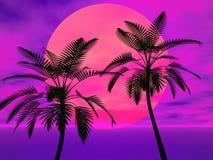 palmowi słońc drzewa Zdjęcia Stock