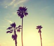 palmowi sylwetek drzewa Fotografia Royalty Free