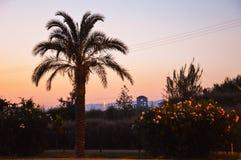 palmowi sylwetek drzewa Obraz Royalty Free
