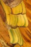 Palmowi tree liście fotografia stock