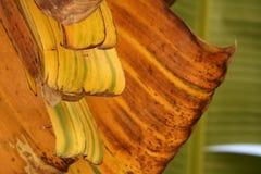 Palmowi tree li?cie Zdjęcia Stock