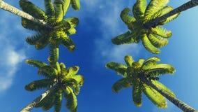 Palmowi treetops i niebieskie niebo Obrazy Stock