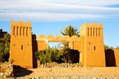 palmowy Africa w Morocco Obraz Royalty Free