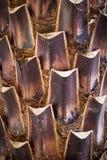 palmowy bagażnik Zdjęcia Stock